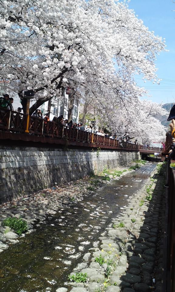 チネ桜祭り