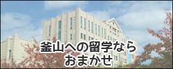 釜山留学サポートのイメージ